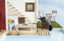 The perfect house…for a bird!