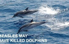 DOLPHINS HIT BY MEASLES