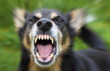 Dog attacks on the increase