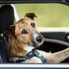 Can dogs really drive!!