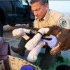 Bear Cub Survives Severe Burns