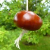 The Conker Ban