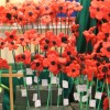 Burgh School Remembers