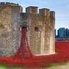 Tower of London Poppy Display Won the Hearts of Millions