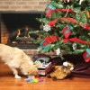 Christmas for your Pets