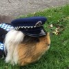 Latest Police Recruit is a Guinea Pig