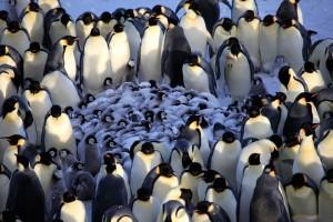 Penguin huddle