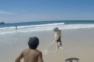 yja Dog-has-skills-Messi-dog-plays-keepy-uppys-on-Brazil-beach